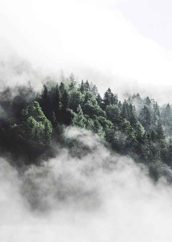 Forest In Mist-3