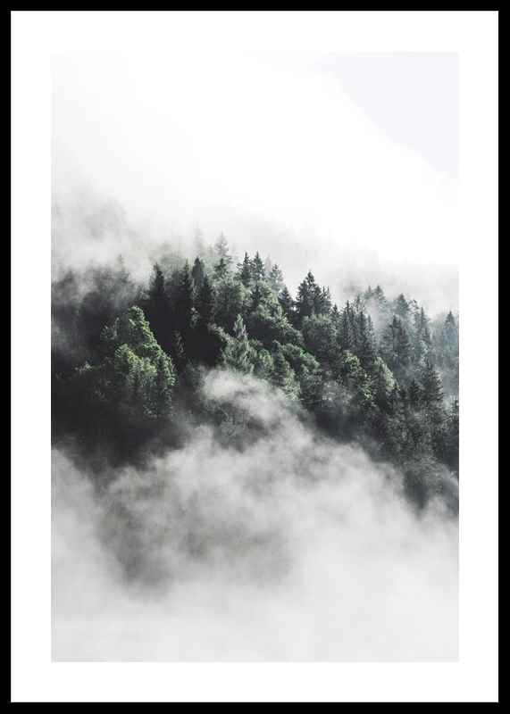 Forest In Mist-0