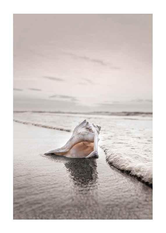 Shell On Beach-1