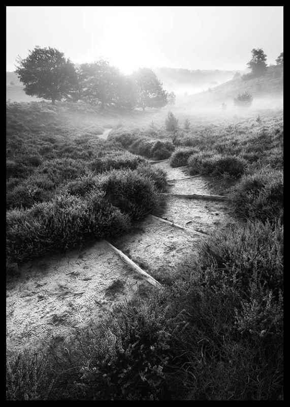 Foggy Road-2
