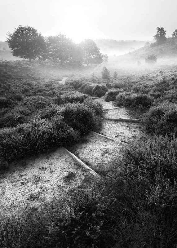 Foggy Road-3