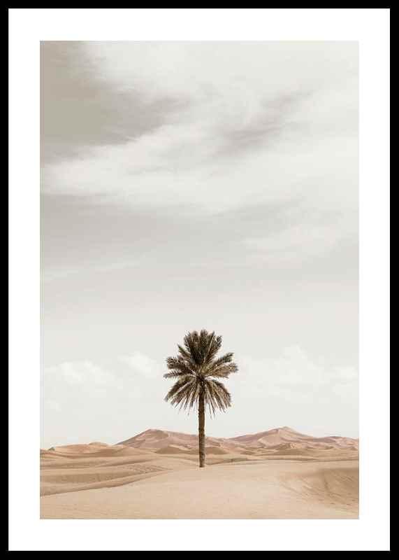 Palm Tree In Desert-0