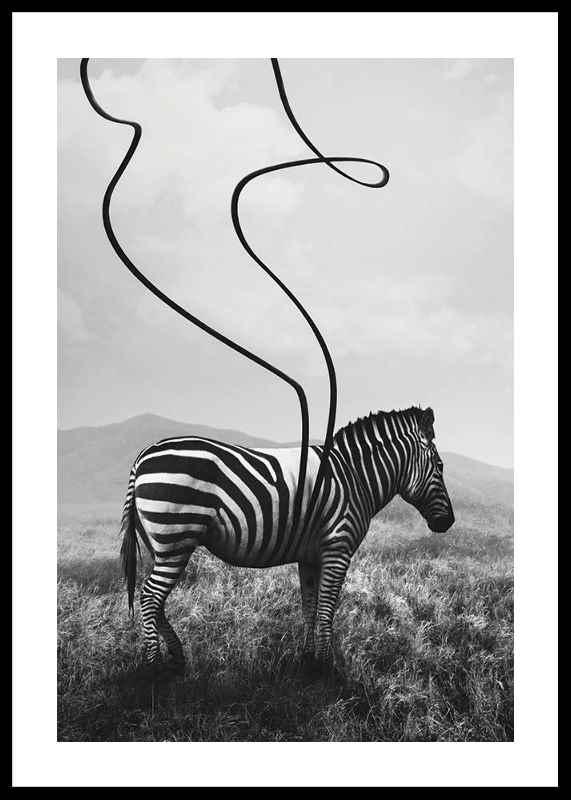 Abstract Zebra-0