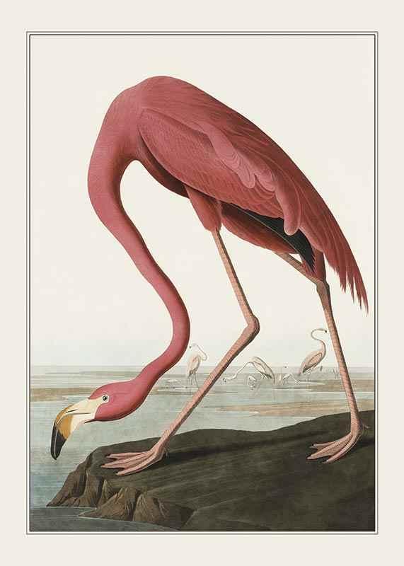 Flamingo 1827-1