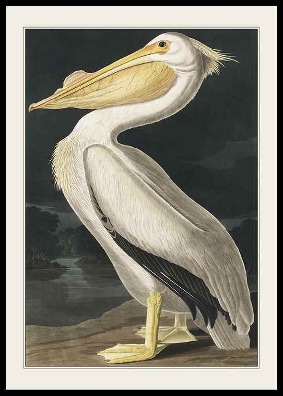 Pelican 1827
