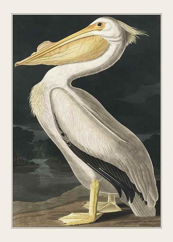 Pelican 1827-1