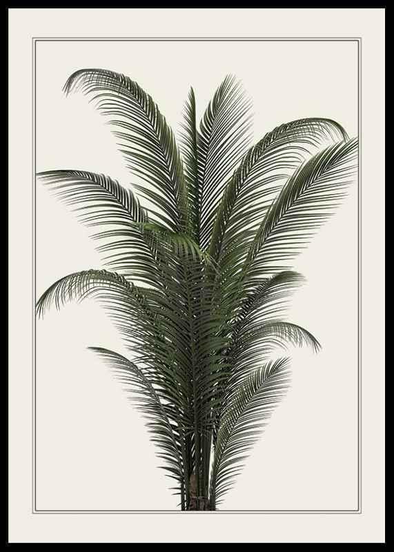 Palm Tree-0
