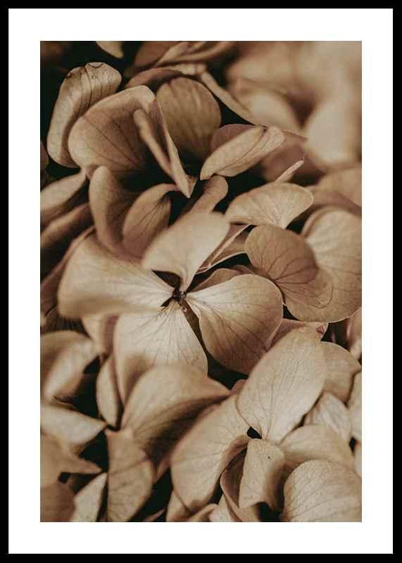 Dried Hydrangea-0