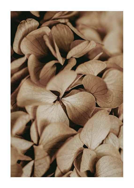 Dried Hydrangea-1