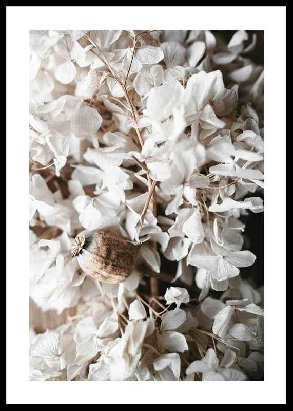 White Hydrangeas-0
