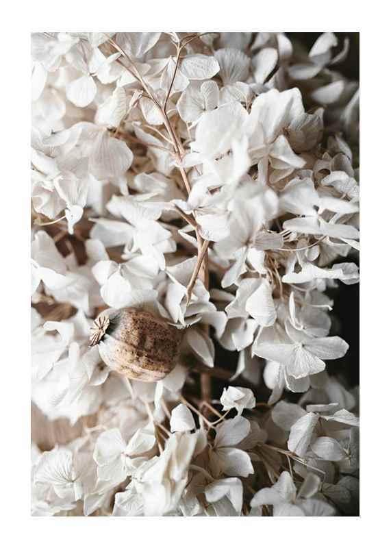 White Hydrangeas-1