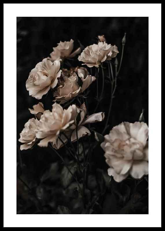 Dark White Roses-0