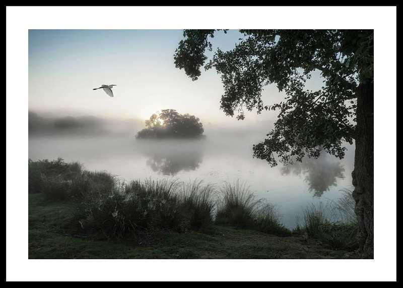Misty Lake Bird