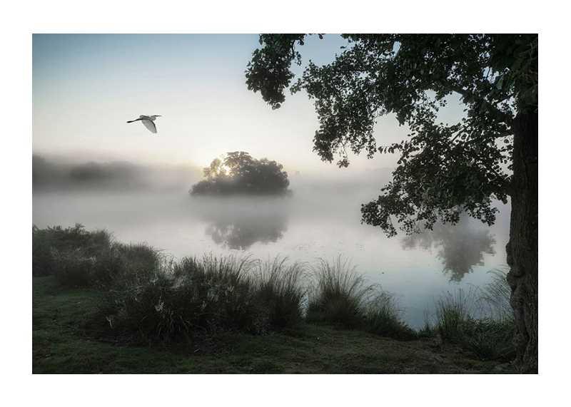Misty Lake Bird-1