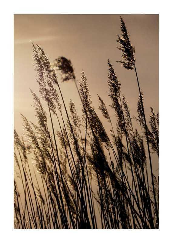 Swaying Reed-1