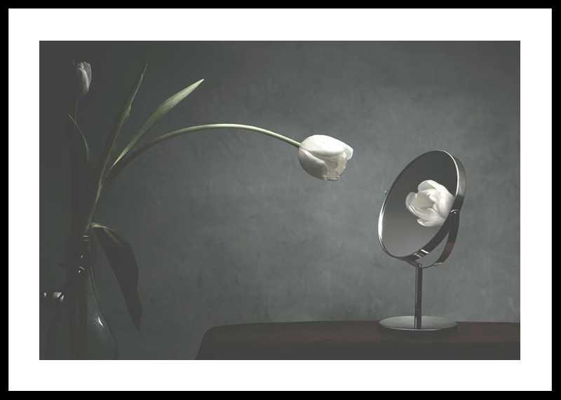 Vanity Tulip