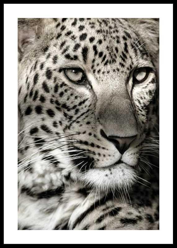 Leopard-0