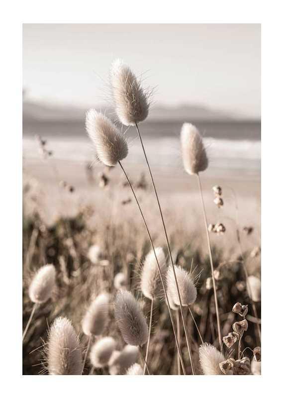 Soft Grass-1