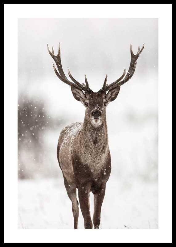 Majestic Red Deer -0