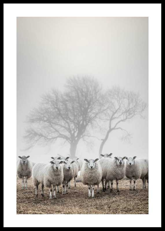 Sheep In Fog-0