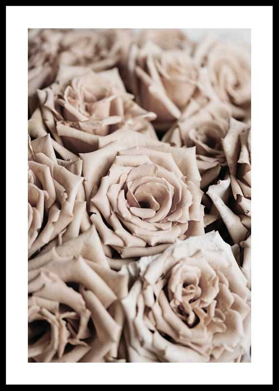 Roses-0