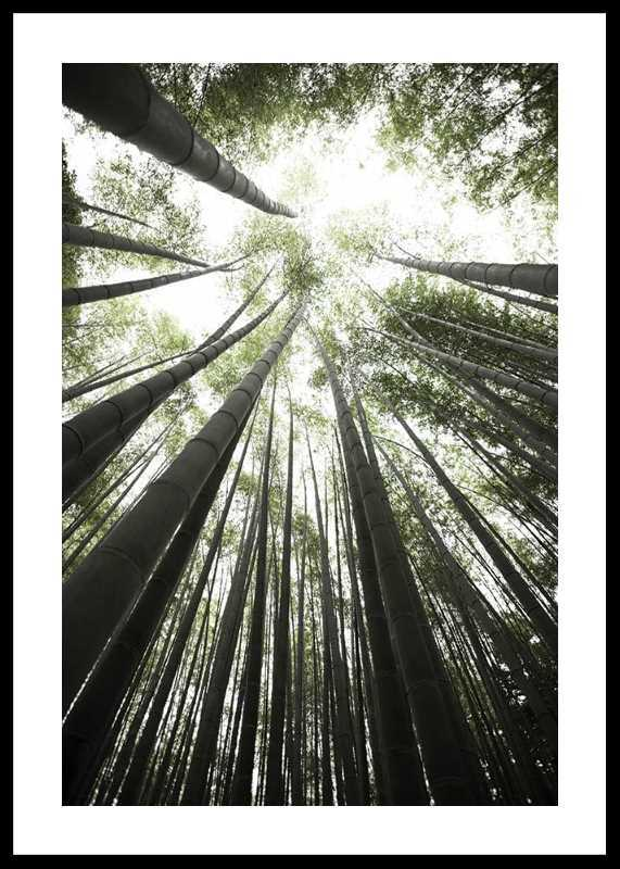 Bamboo Forest-0