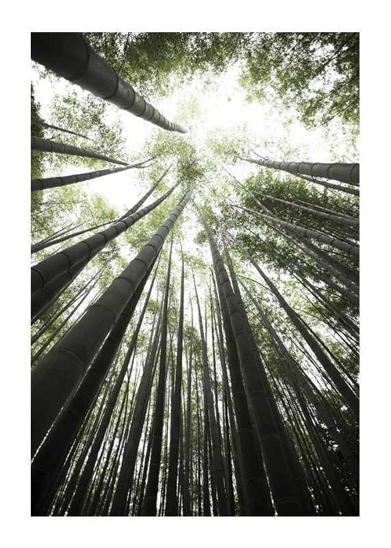 Bamboo Forest-1