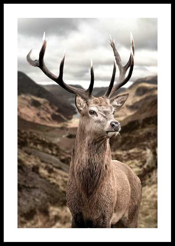Deer In Mountain Landscape