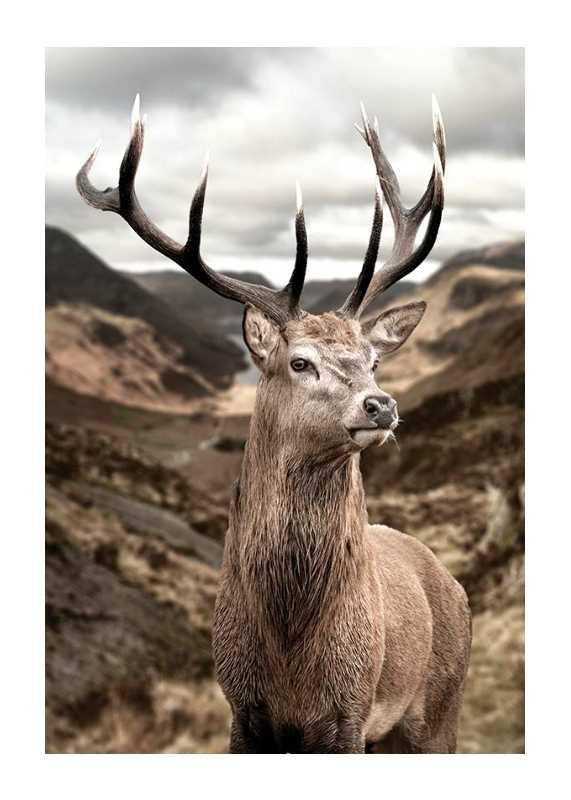 Deer In Mountain Landscape-1
