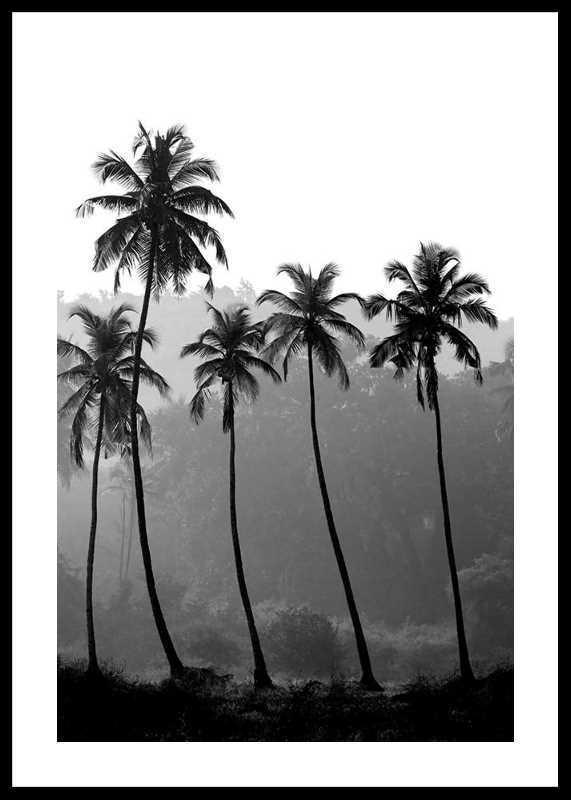 Palms-0