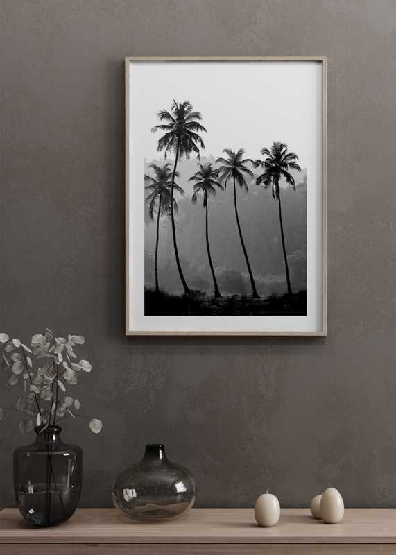 Palms-4
