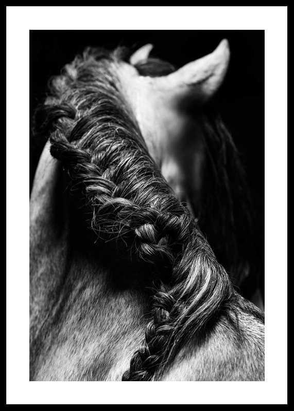 Horse Mane-0