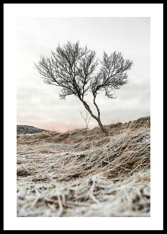 Iceland Tree