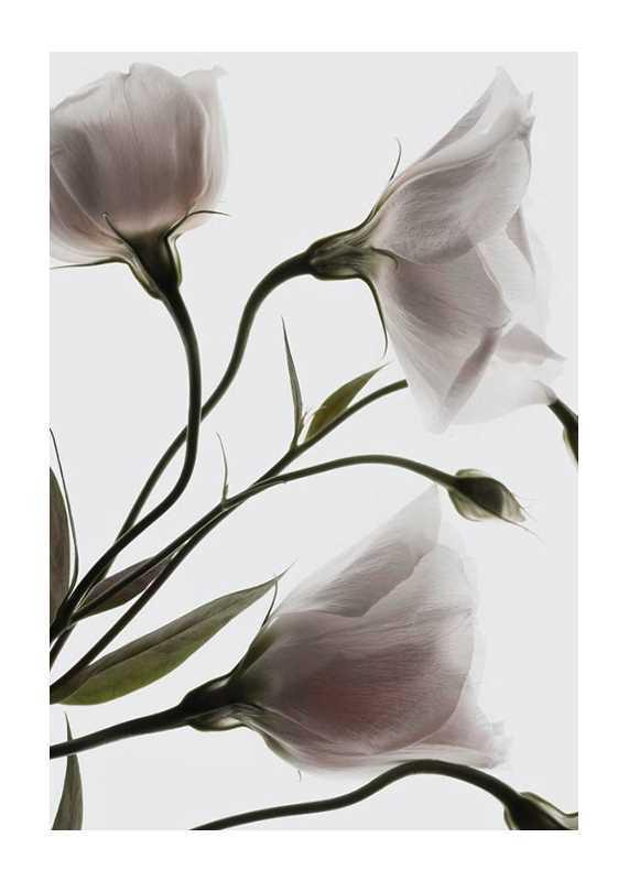 Three White Flowers-1