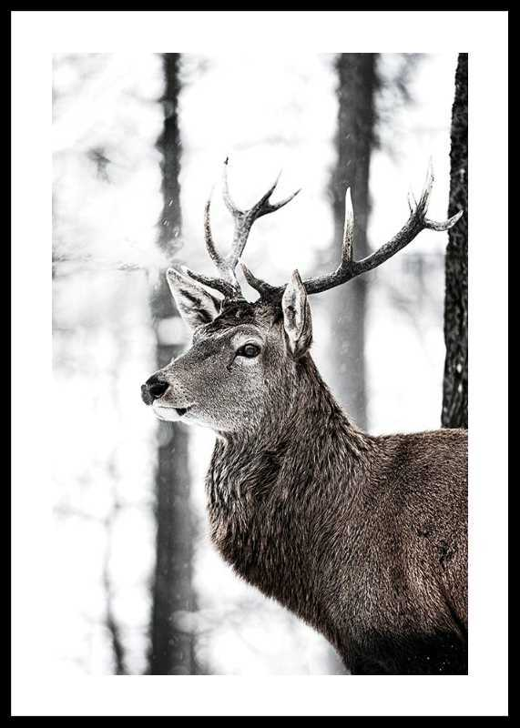 Stag In Forest