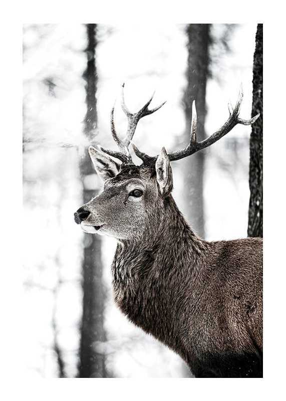 Stag In Forest-1