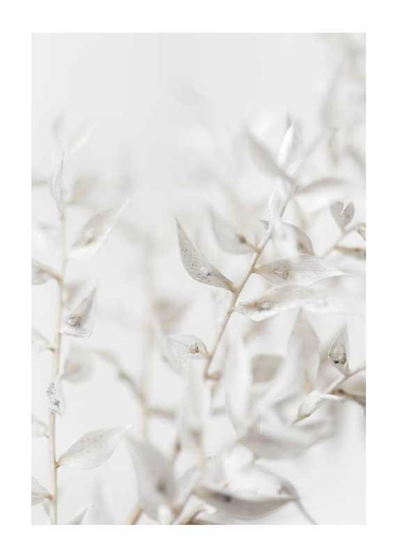 White Dried Flower-1