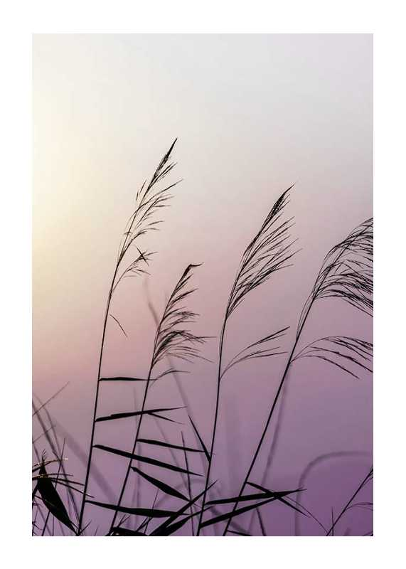 Weeds In Sunset-1