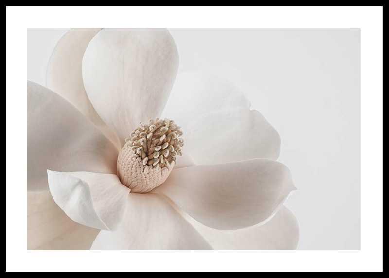 Beige Magnolia No1-0