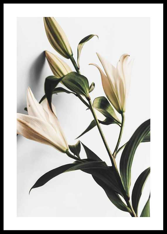 Lilies-0