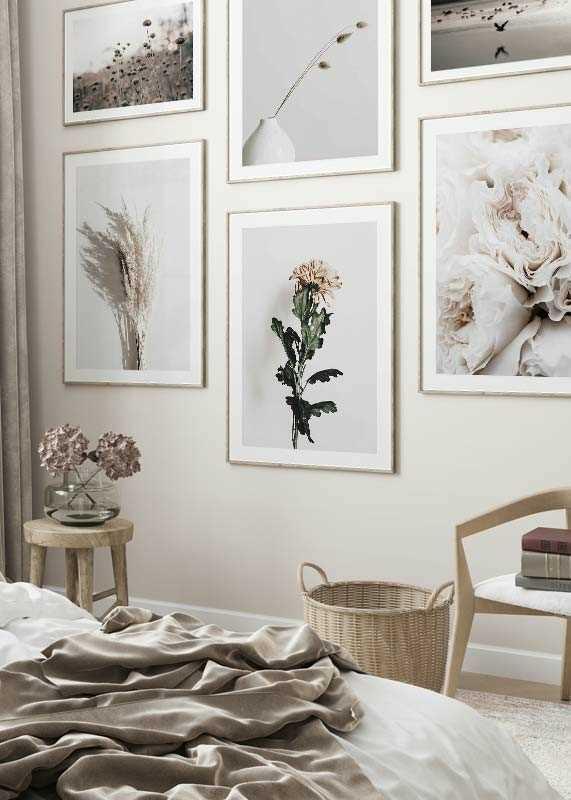 Chrysanthemum No1-4