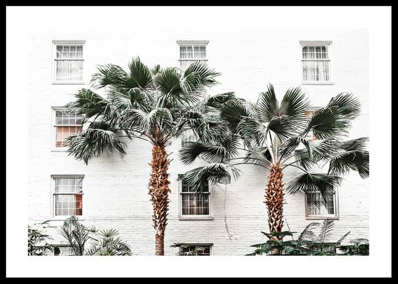 City Palms-0