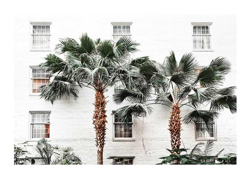 City Palms-1