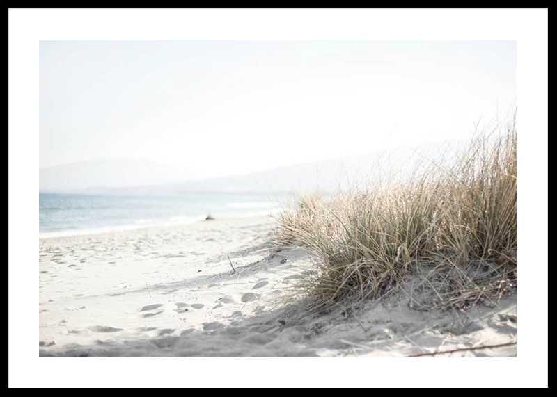 Marram Grass At Beach