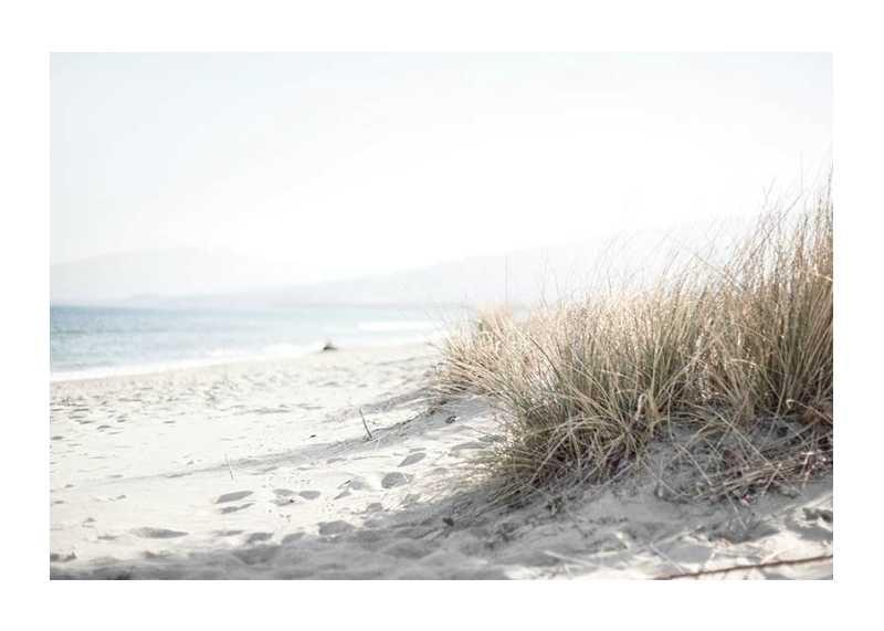 Marram Grass At Beach-1