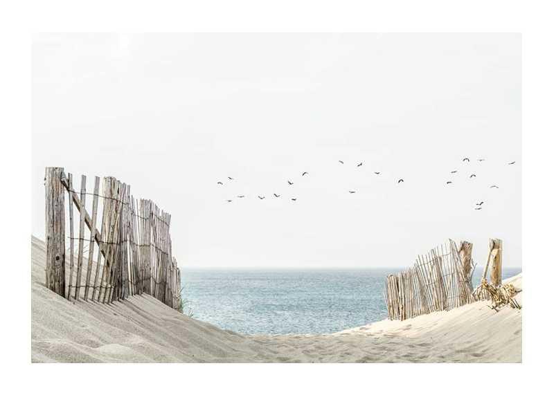 Birds At Cape Cod-1