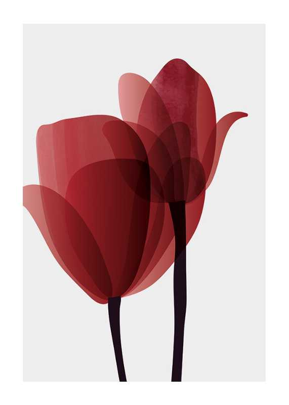 Red Tulips No1-1