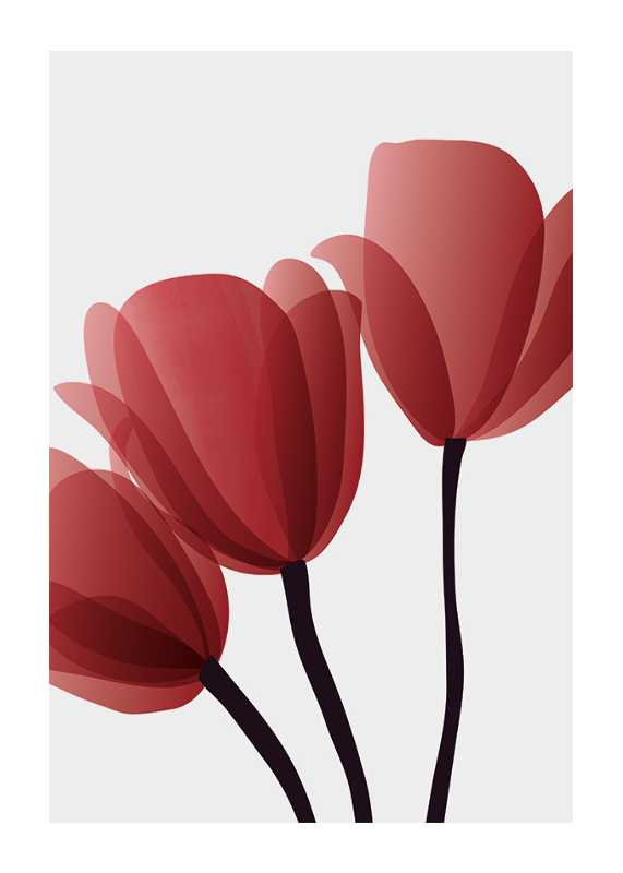 Red Tulips No2-1
