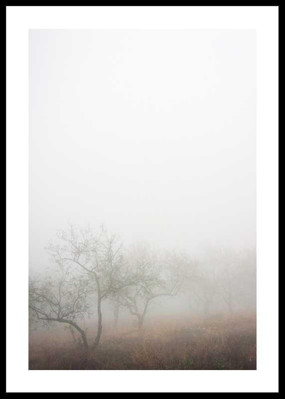 Trees In Fog-0