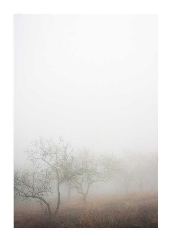 Trees In Fog-1